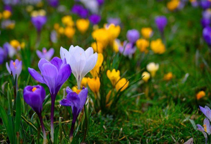 Best Spring Blooming Flowers to Brighten Up Your Garden