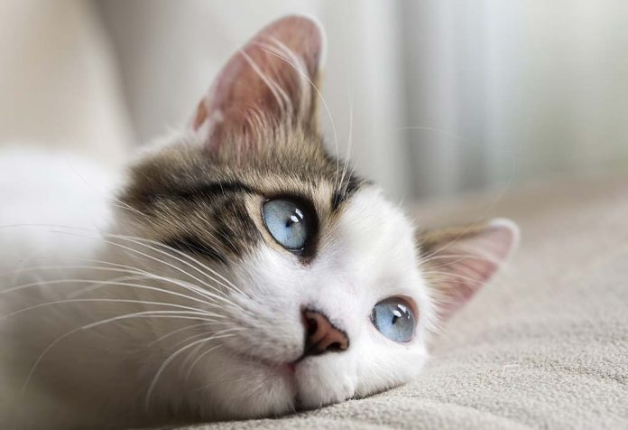 Amazing Cat Facts for Kids