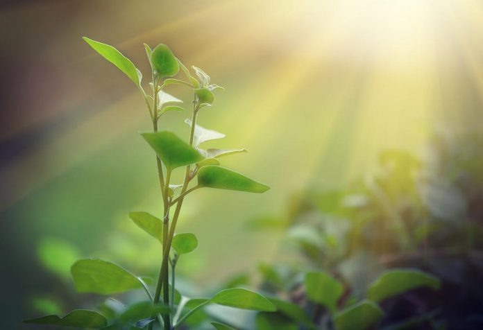 Facts About Photosynthesis for Kids