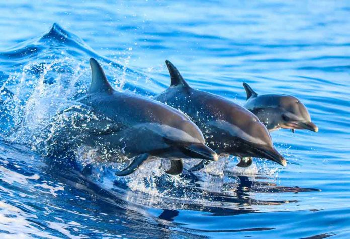 Interesting Facts About Dolphins for Kids