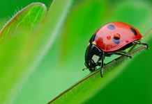 Cool Facts About Ladybugs
