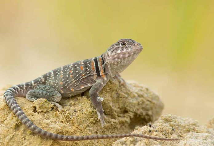 Interesting Lizard Facts for Kids