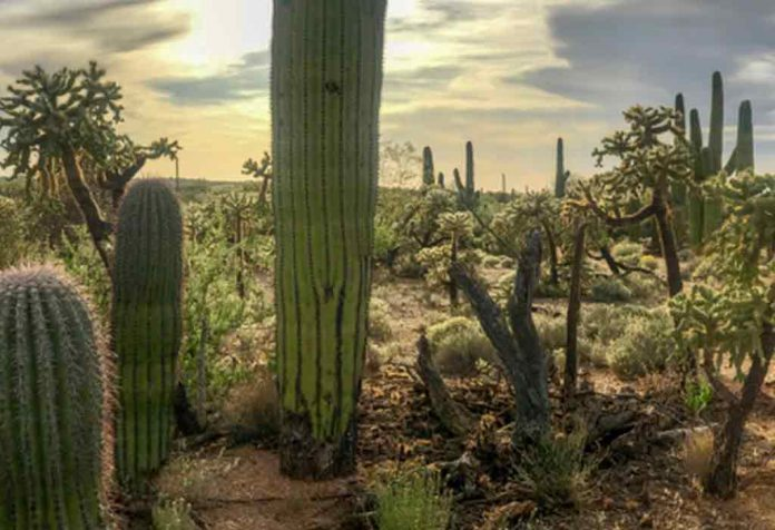 Amazing Cactus Facts For Kids