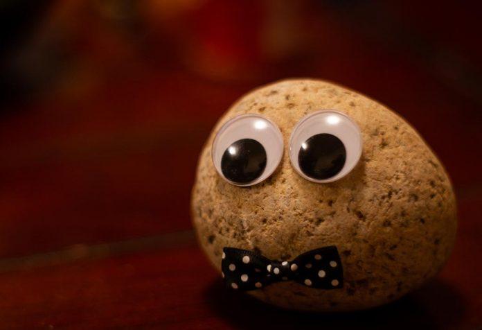 5 Simple Pet Rock Crafts Ideas For Kids