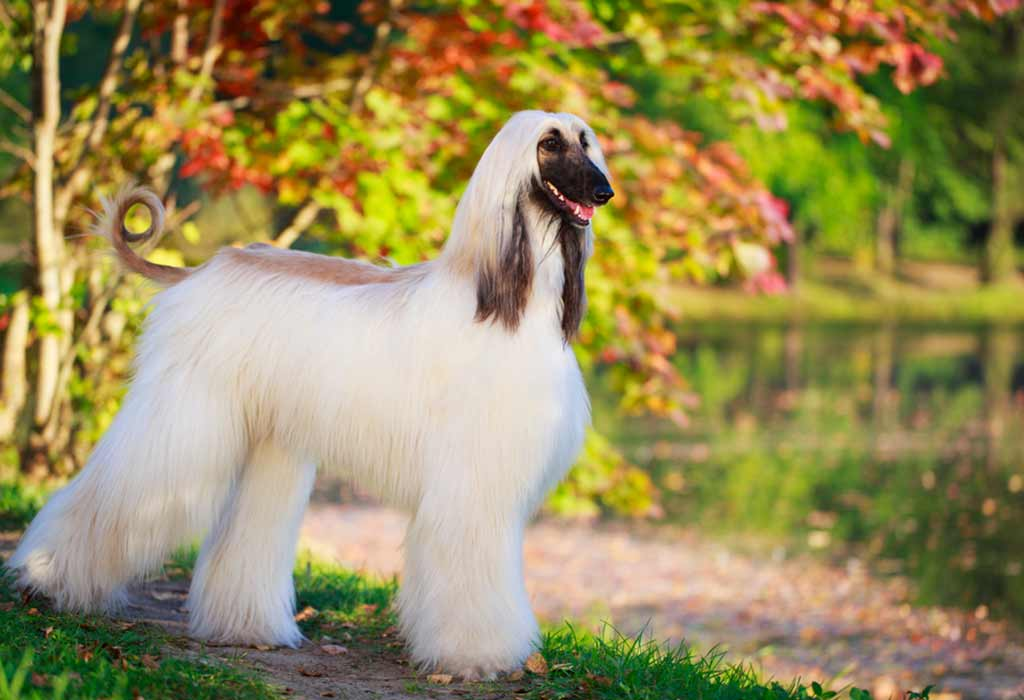 Stylish Big Dogs for Your Family