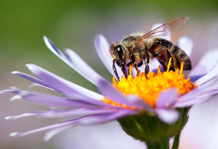 Amazing Bee Facts for Kids