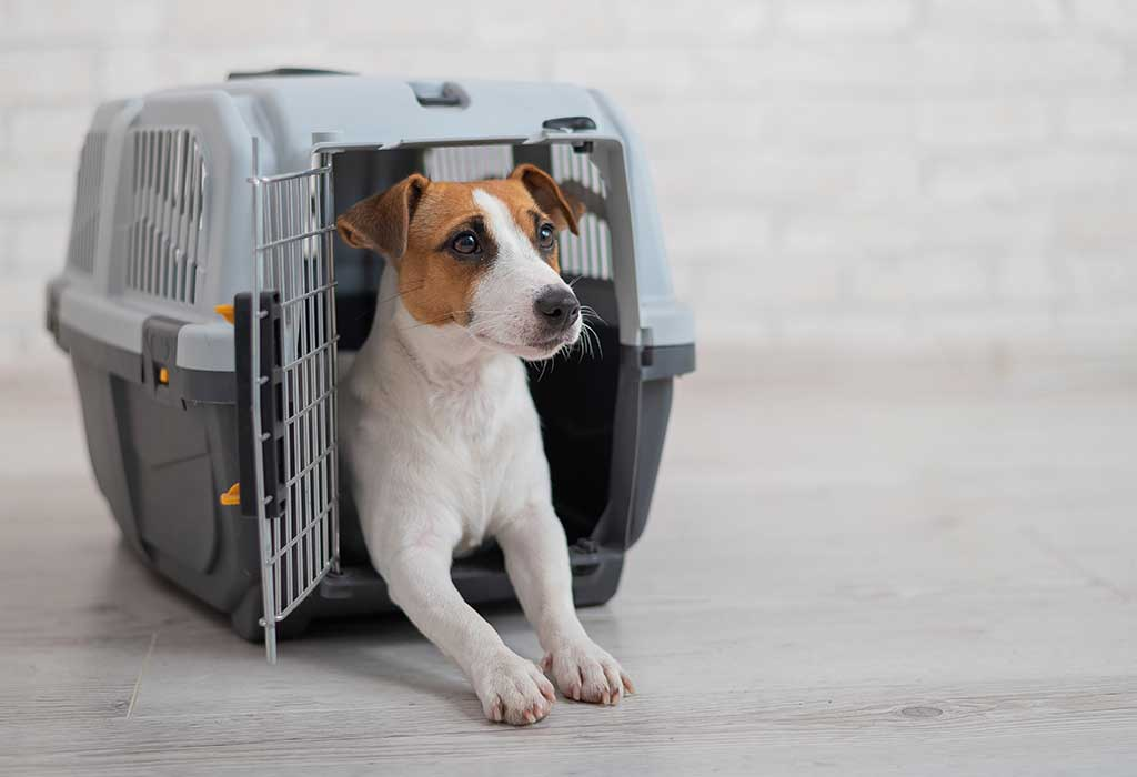 Useful Gifts for Dog Owners Who Travel A Lot