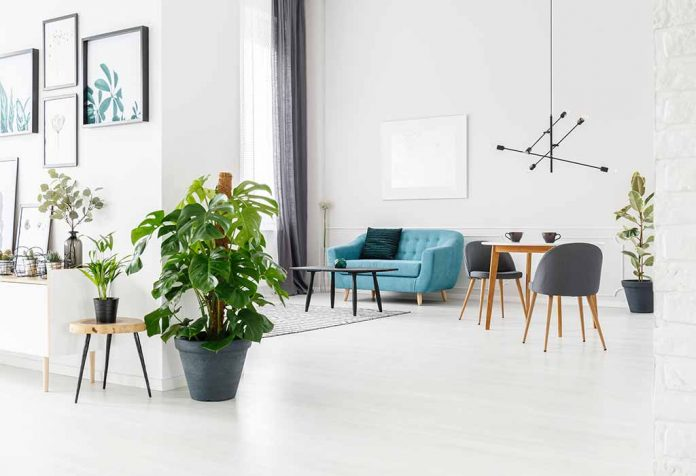 Best Aesthetic Plants That Are Easy to Maintain