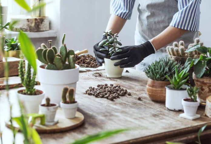 The Right Way to Grow and Care for Succulents