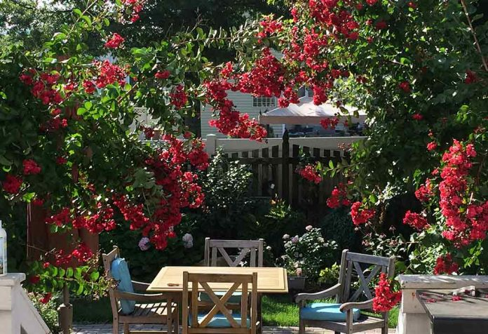 TOP 10 TREES THAT ARE PERFECT TO PLANT IN FRONT YARDS