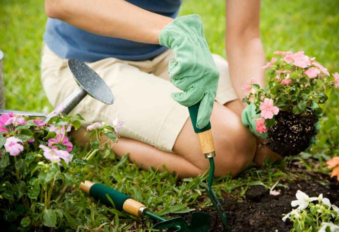 How to Start a Garden From Scratch - 10 Steps for New Gardeners