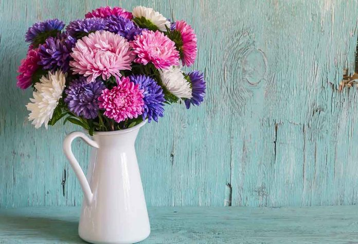 HOW TO GROW AND CARE FOR ASTER FLOWERS IN A HOME GARDEN