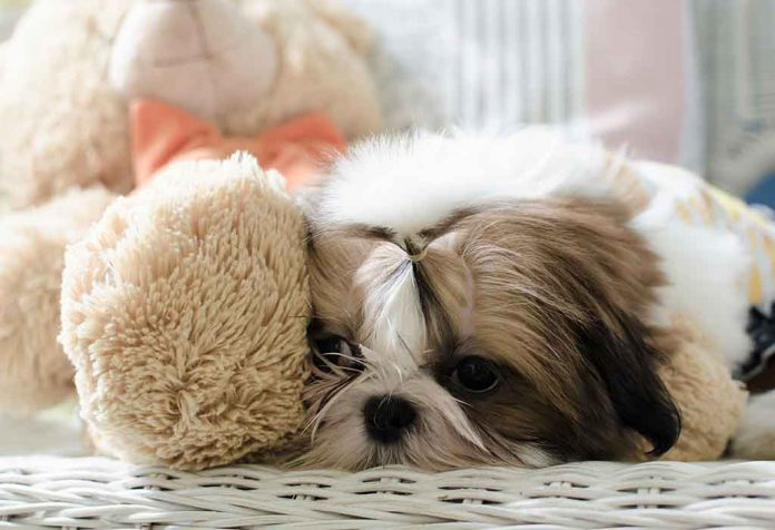 MOST LAZY AND LEAST ACTIVE DOG BREEDS