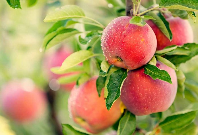 Fruit Trees You Can Plant and Grow at Home