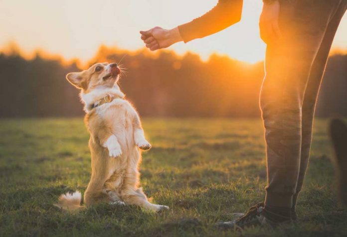 EASY DOG TRICKS YOU CAN TEACH YOUR FLUFFY BEST FRIEND