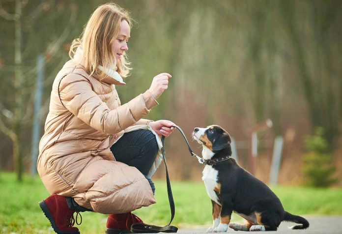 Basic and Essential Dog Commands