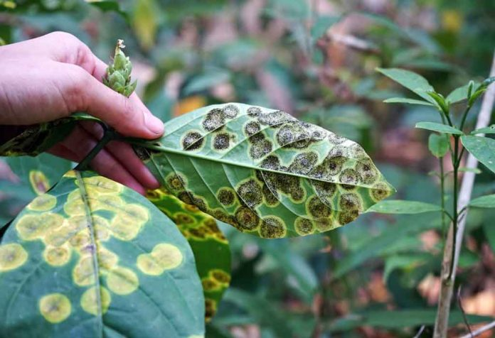 BASIC PLANT DISEASES - TYPES, CAUSES, AND PREVENTION