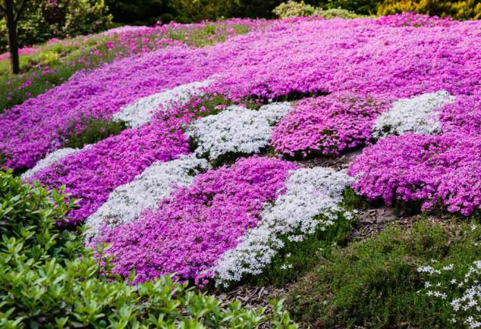 Beautiful Ground Cover Plants You Can Pick for Your Backyard