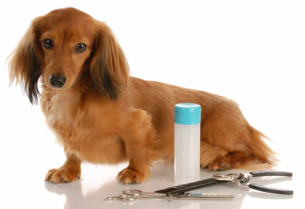 How to Perfectly Trim Your Dog's Nails?