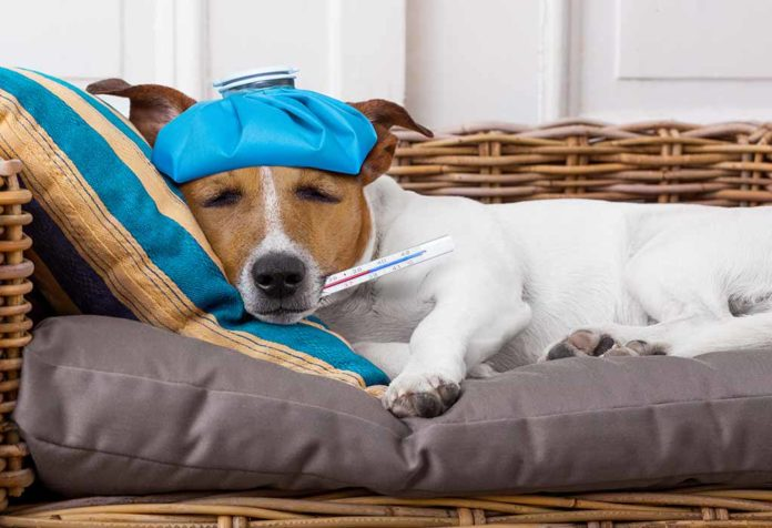 How to Know If Your Dog Is Sick and What to Do