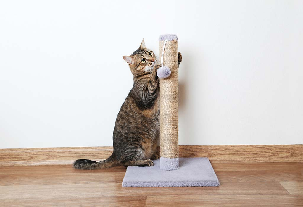 How to Stop Cats from Scratching the Furniture?