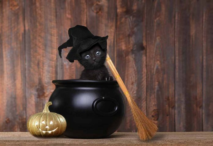 15 Creative Halloween Costumes for Your Pet Cat