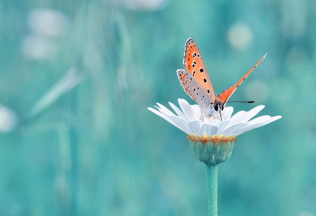 50 CUTE BUTTERFLY BABY GIRL NAMES WITH MEANINGS